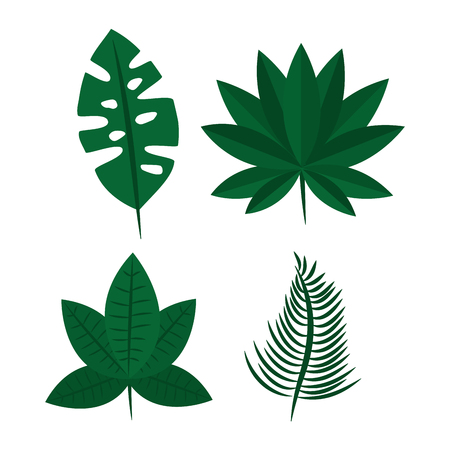 tropical leaves exotic foliage natural differents vector illustration Ilustrace