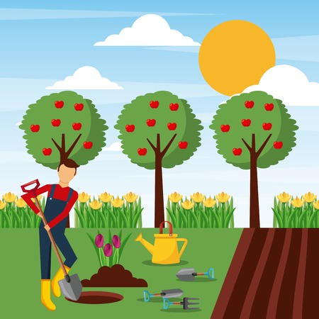 man planting tulip flowers in the garden vector illustration Stockfoto - 91480166