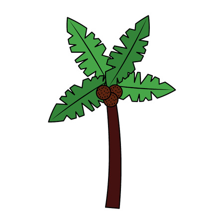 tropical palm tree coconut natural vector illustration