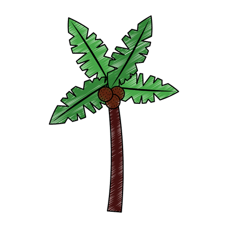 A tropical palm tree coconut natural vector illustration drawing image