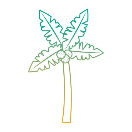 A tropical palm tree coconut natural vector illustration