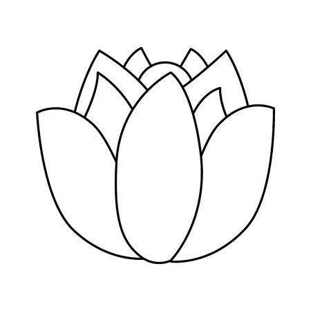 A lotus flower wild botanical natural vector illustration
