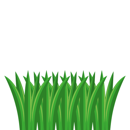 Grass cultivated isolated icon vector illustration design