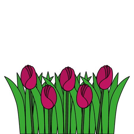 beautiful roses cultivated icon vector illustration design Reklamní fotografie - 91870185
