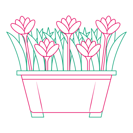 Beautiful flowers cultivated in pot vector illustration design Ilustração