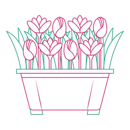 beautiful flowers cultivated in pot vector illustration design Banco de Imagens - 91904436