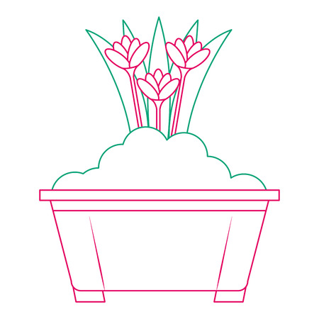 Beautiful flowers cultivated in pot vector illustration design Illustration