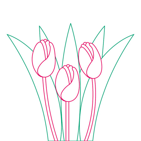 Beautiful roses, cultivated icon, vector illustration design