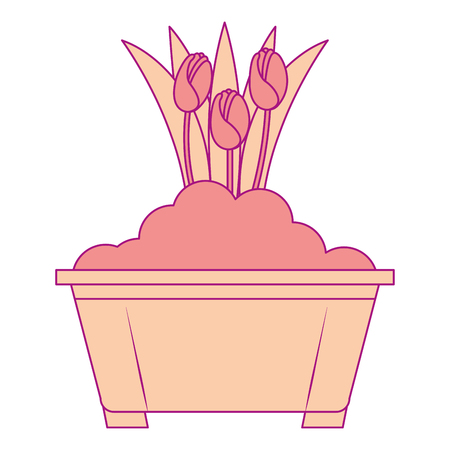 Beautiful roses cultivated in pot vector illustration design