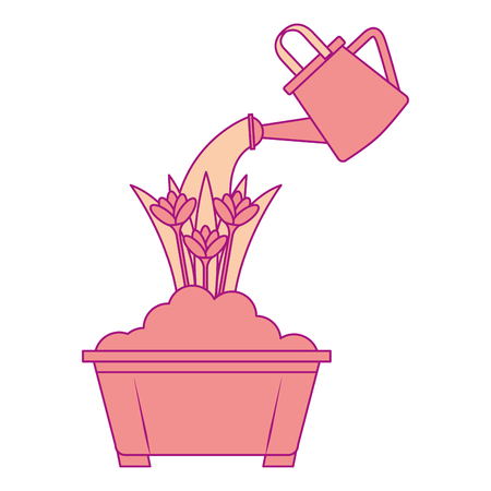 beautiful roses cultivated in pot with sprinkler vector illustration design Illustration