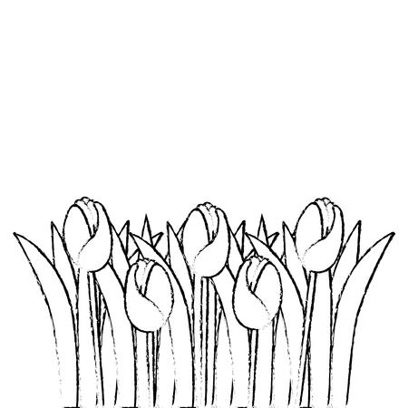 beautiful roses cultivated icon vector illustration design Ilustração