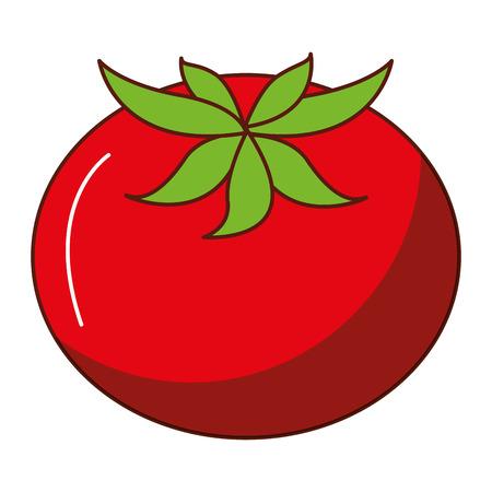 fresh tomato isolated icon vector illustration design