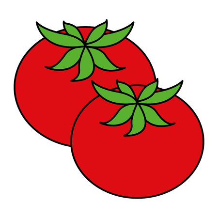fresh tomatoes isolated icon vector illustration design Stock Vector - 91898717