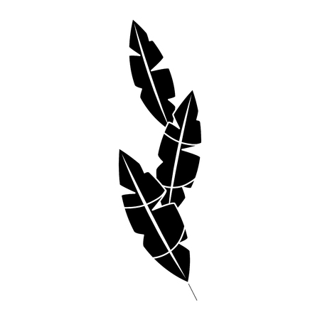 feathers tropical icon image vector illustration design  black and