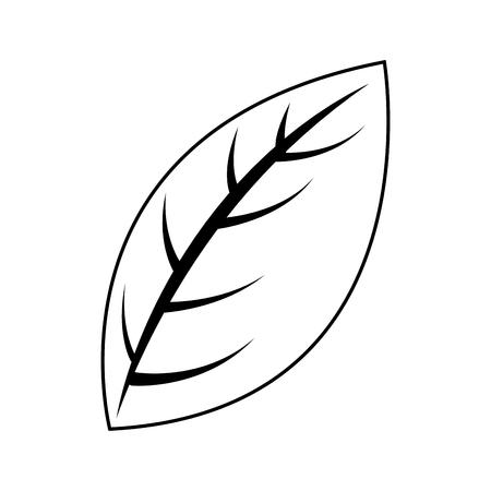 Leaf single delicate icon image vector illustration design Ilustrace