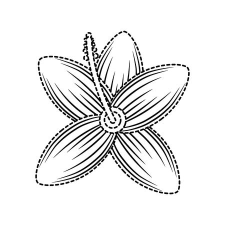 Tropical hibiscus flower natural petal flora vector illustration Illustration