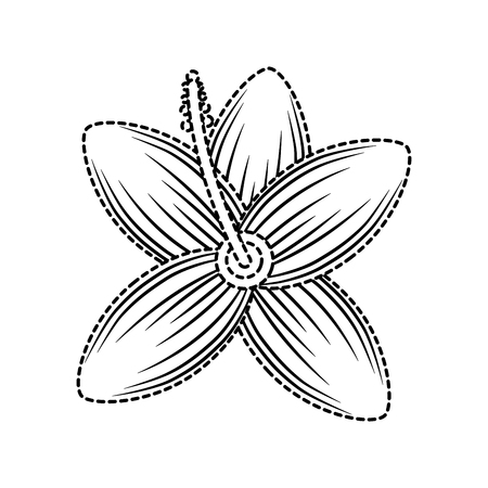 Tropical hibiscus flower natural petal flora vector illustration Ilustrace