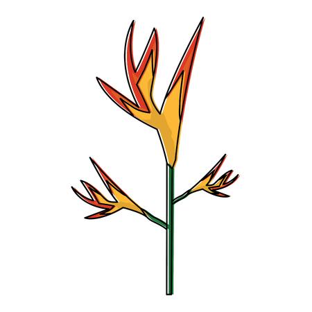 Tropical bird of paradise vector illustration