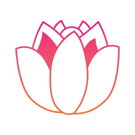 Lotus flower Ilustrace