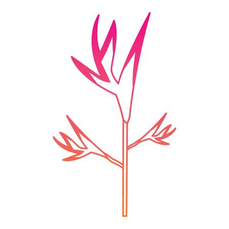 exotic tropical flower bird of paradise vector illustration Illustration
