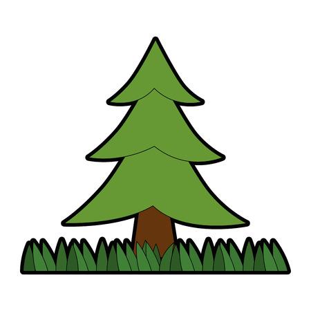 Pine tree plant with grass vector illustration design Illusztráció