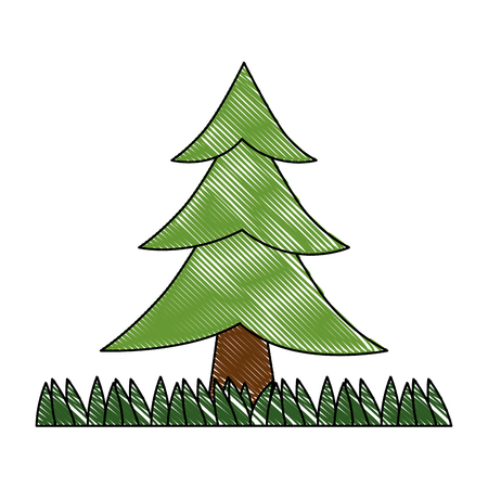 pine tree plant with grass vector illustration design Illustration