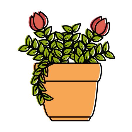 Roses house plant in pot  illustration design. Illustration