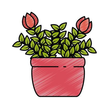 roses house plant in pot vector illustration design Stock Vector - 92228547