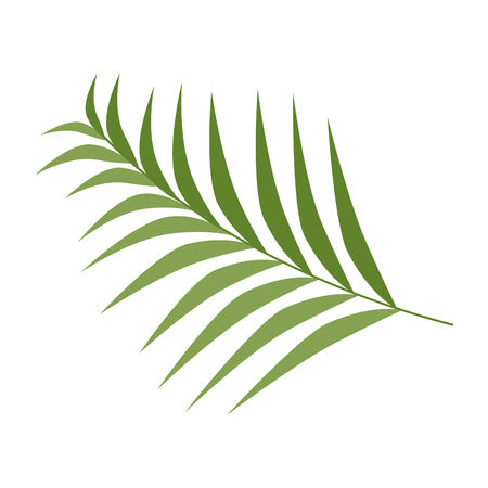 Tropical palm leaf icon vector illustration design Ilustração