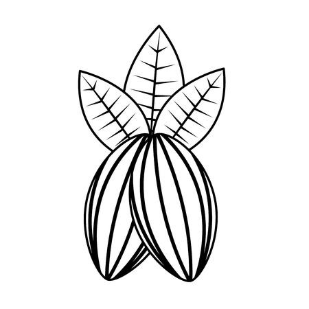 코코아 콩 및 잎 과일 음식 건강 벡터 일러스트 레이 션