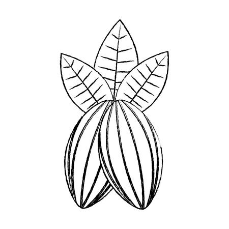 Grãos de cacau e folhas fruta comida saudável vector illustration Foto de archivo - 92282785