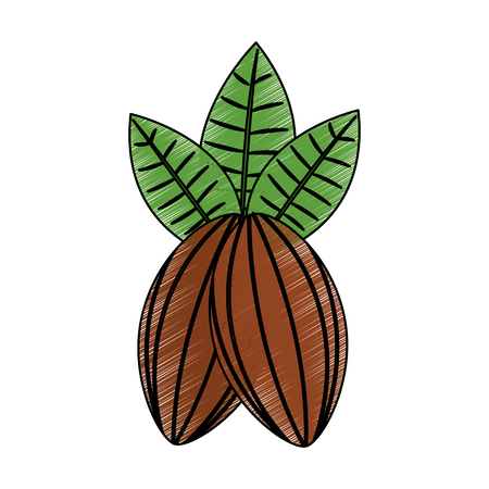 cocoa beans and leaves fruit food healthy vector illustration Ilustração
