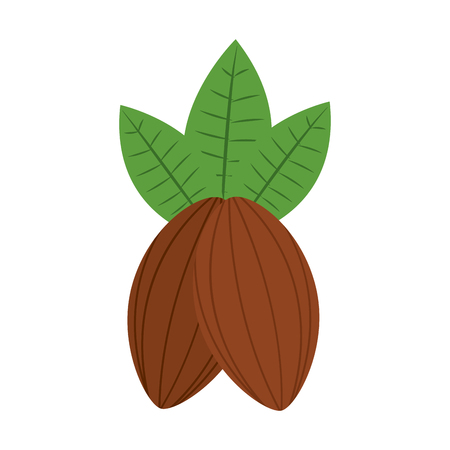 Cacao fruit chocolate icon image vector illustration design. 일러스트