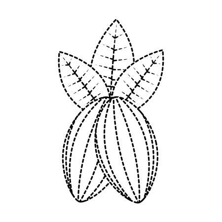 Cacao fruit chocolade pictogram afbeelding vector illustratie ontwerp zwarte stippellijn. Stock Illustratie