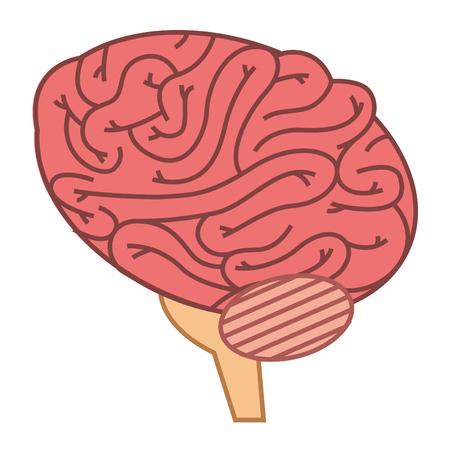 Brain human isolated icon vector illustration design. Stock Vector - 92553495