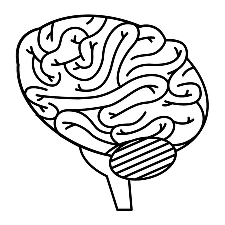 Brain human isolated icon vector illustration design. Illustration