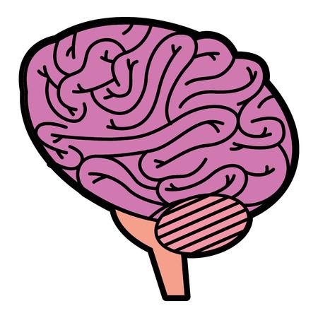 brain human isolated icon vector illustration design 向量圖像