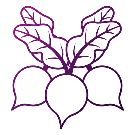 3ビート野菜健康食品ベクトルイラスト  イラスト・ベクター素材