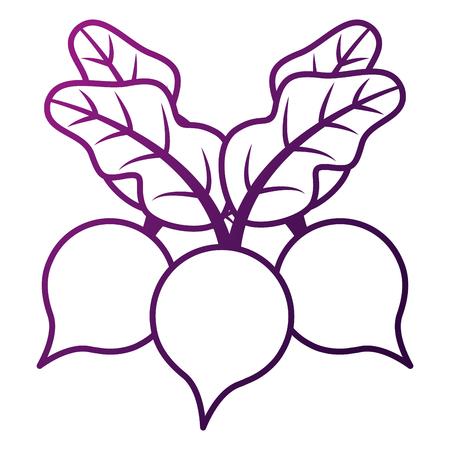 drie bieten plantaardige gezonde voeding vector illustratie