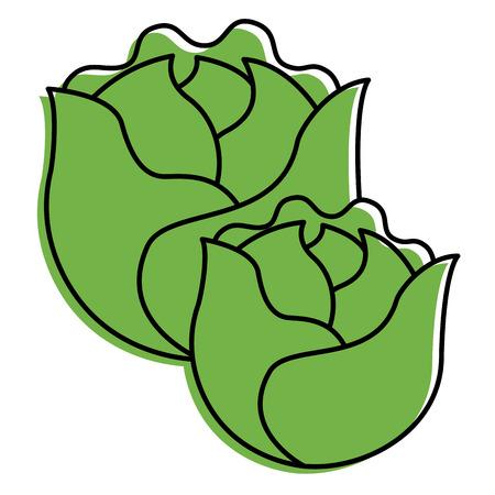 two lettuce vegetable raw fresh food vector illustration