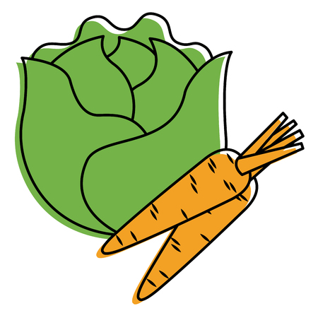lettuce and carrots vegetables fresh food vector illustration