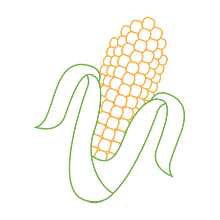 corn cob grain harvest raw icon vector illustration Çizim