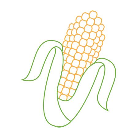 corn cob grain harvest raw icon vector illustration Illustration