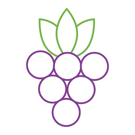 bunch grapes fruit fresh nutrition icon vector illustration