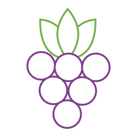 Manojo de uvas fruta icono de ilustración de vector de nutrición fresca Foto de archivo - 93319148
