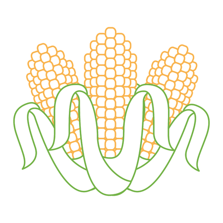Three corn grain food nutrition agriculture vector illustration.
