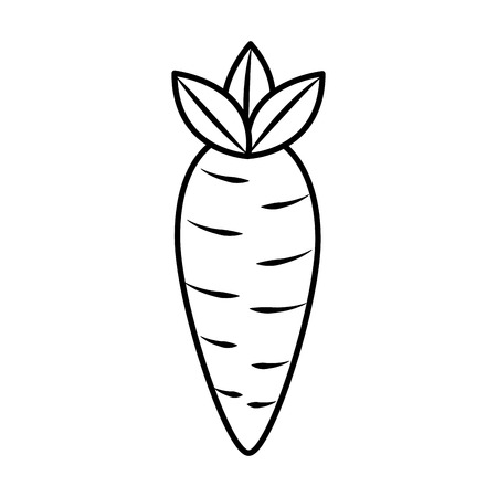 vegetable food carrot raw healthy vector illustration