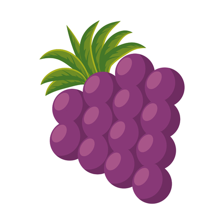 grapes fresh fruit icon vector illustration design Ilustrace