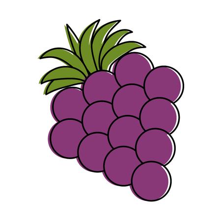 포도 신선한 과일 아이콘 벡터 일러스트 디자인