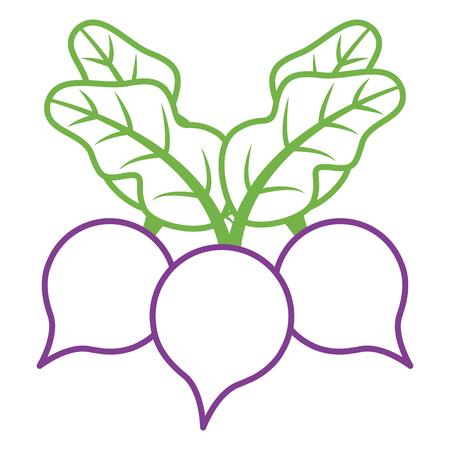 three beet vegetable healthy food vector illustration Illustration